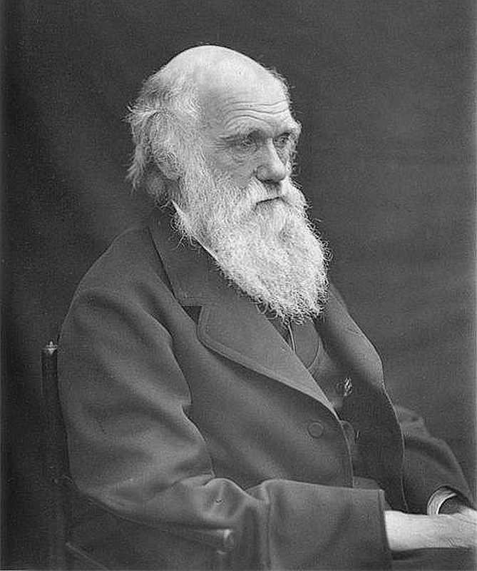 Darvins