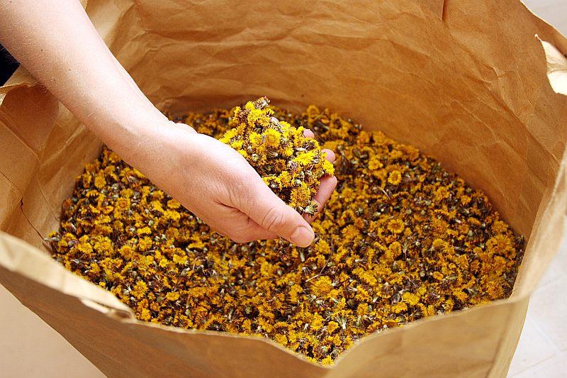 Indrānu ražotne ar māllēpeņu ziediem uzsāk jauno marmelādes vārīšanas sezonu. Savukārt balonos rūgst mājas vermuts, kas tiks izmantots vermuta marmelādes gatavošanai. Katrai marmelādei ir savi cienītāji.