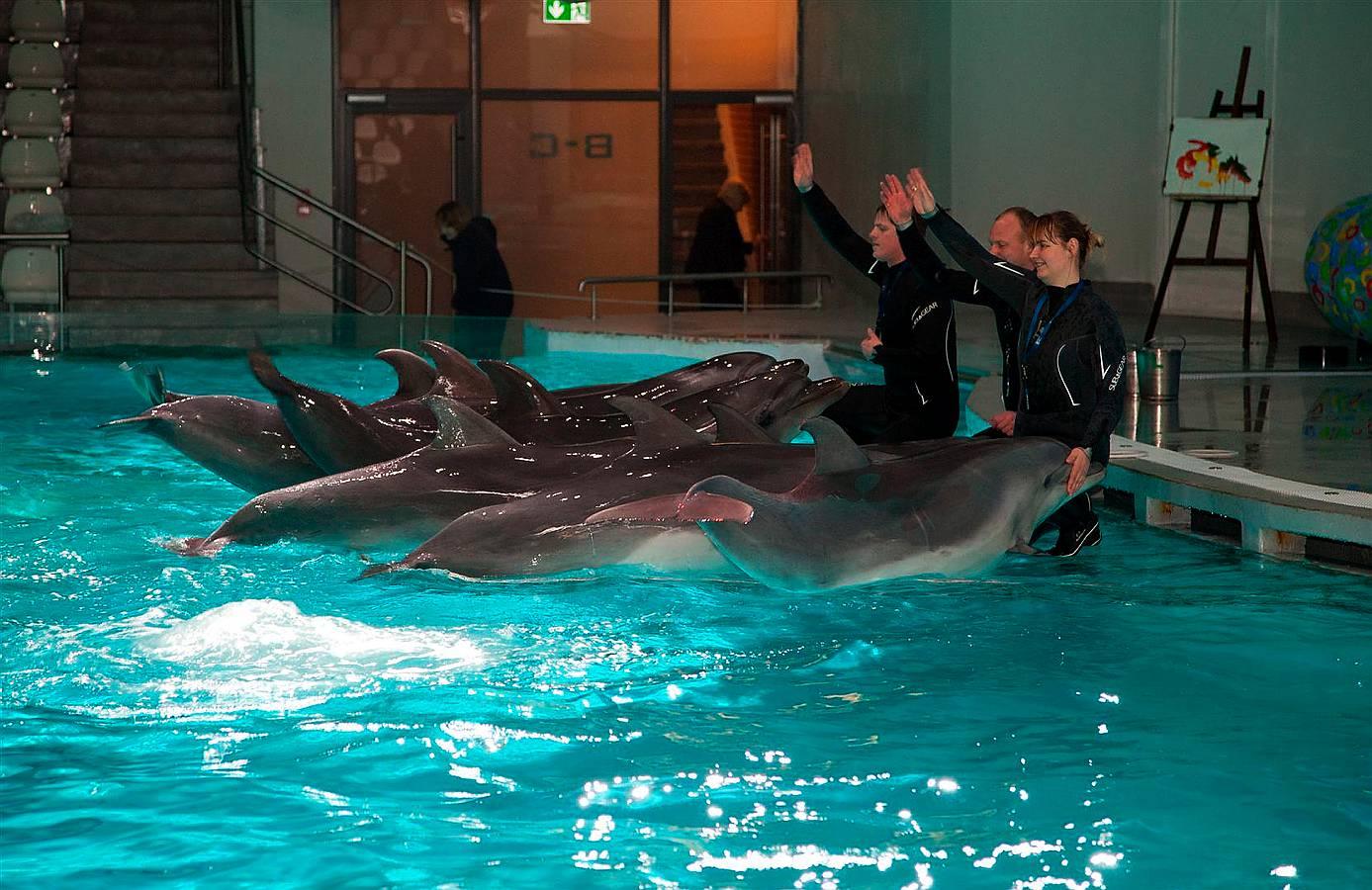 Viens no Eiropas labākajiem delfinārijiem Kuršu kāpā pie Klaipēdas trīs gadus bija slēgts apmeklētājiem, jo notika vērienīga tā rekonstrukcija. Kopš pagājušā gada Ziemassvētkiem delfinārijs atkal darbojas, piedāvājot noskatīties delfīnu izrādes.