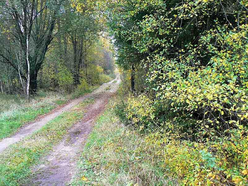 Uz šī Dunikas pagasta meža celiņa pagājušo sestdien bija izvietota mednieku līnija dzinējmedībās, kurās viens kļūmīgs šāviens izdzēsa mednieka dzīvību.