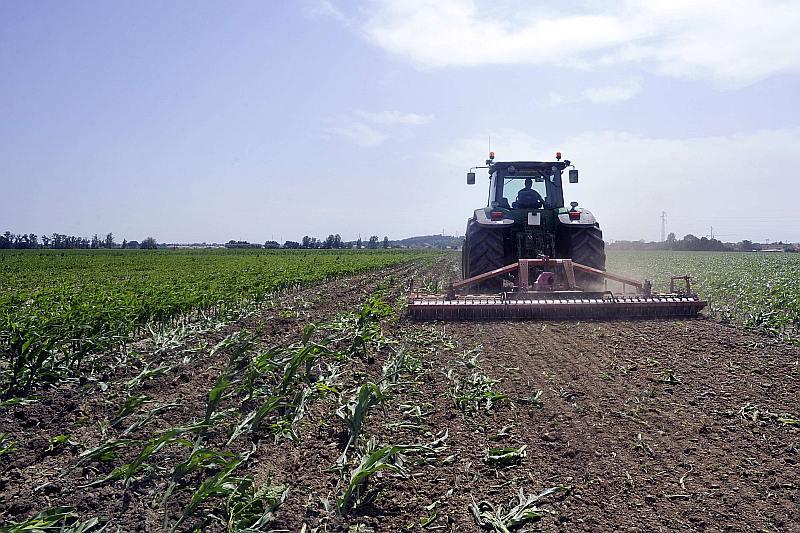 Anti ĢMO aktīvisti iznīcina fermera Žaka Buvē modificētās kukurūzas sējumus Francijas dienvidos viena hektāra platībā. Kukurūza sēta pirms tās aizlieguma Francijā.