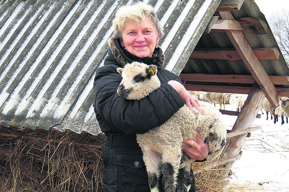 """Pasienes pagasta """"Saulkalnu"""" saimniece Ina Dukšta ar sava ganāmpulka jaunāko iemītnieku."""