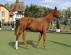 """""""Rusty clone 1"""" izaudzēts turpat, kur klonēts, – kompānijas """"Cryozootech"""" zirgu staļļos Sončampā Francijā."""