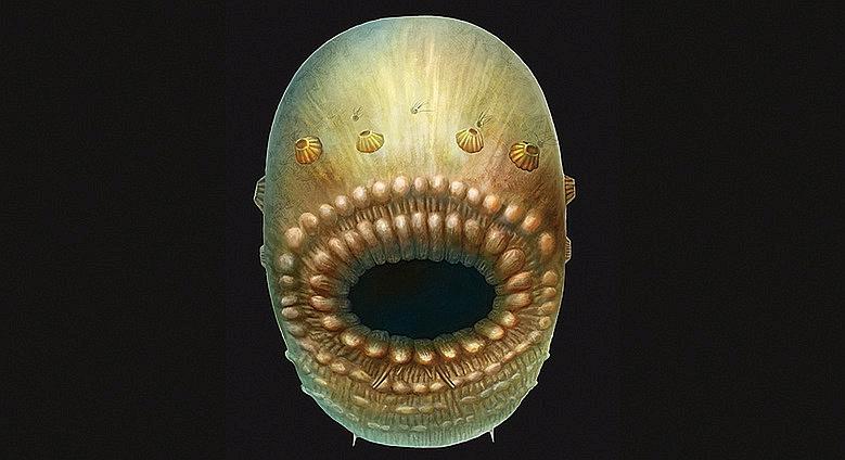 """Mākslinieka rekonstruētais """"Saccorhytus"""" attēls pēc atrastajām fosiliju atliekām."""