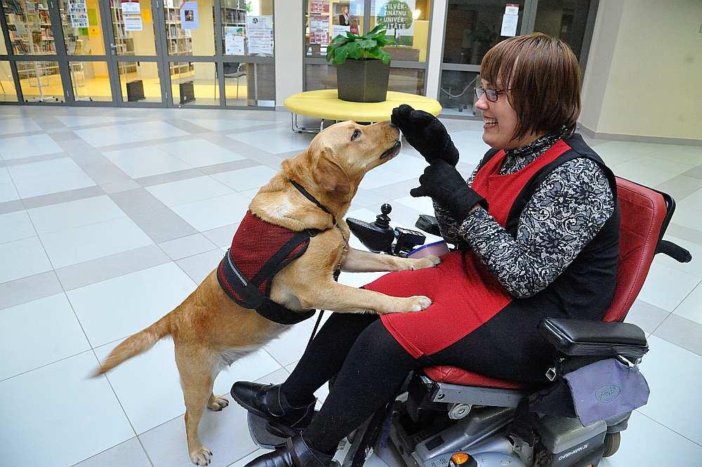 Elfa drīzumā kļūs par pirmo sertificēto suni asistentu Latvijā un savai saimniecei Baibai ikdienā palīdz novilkt cimdus, jaku, zeķes, padot dažādus priekšmetus, piecelties no gultas, kā arī ieslēgt un izslēgt gaismu.