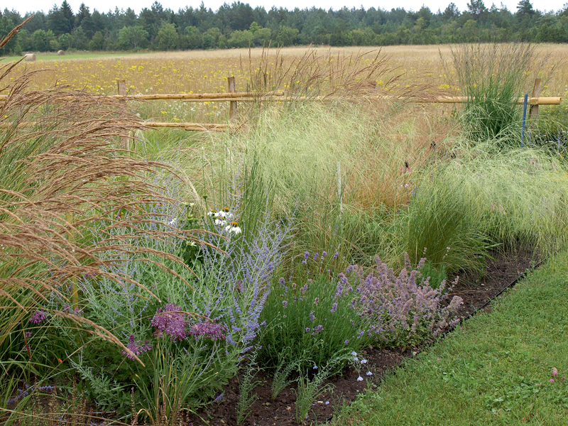 Mazliet pļavas ielaists arī dārzā. Sētā puķu pļava izpļauta kā šaurs līklocis. Tā izskatās efektīgi un pēc noziedēšanas un nopļaušanas vasaras otrajā pusē neatstās lielu, melnu zemes pleķi.