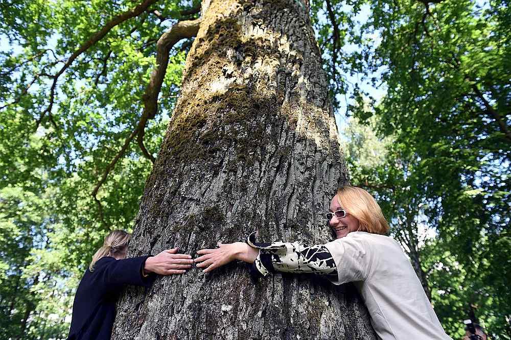 Kultūras ministre Dace Melbārde piedalās koku mērīšanas demonstrācijā pie dižkoka Ēbelmuižas parkā Rīgā 2017.gada jūnijā.
