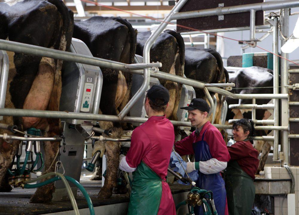 """Ilustratīvs foto. Slaukšanas karuselis vienā no AS """"Agrofirma Tērvete"""" fermām"""
