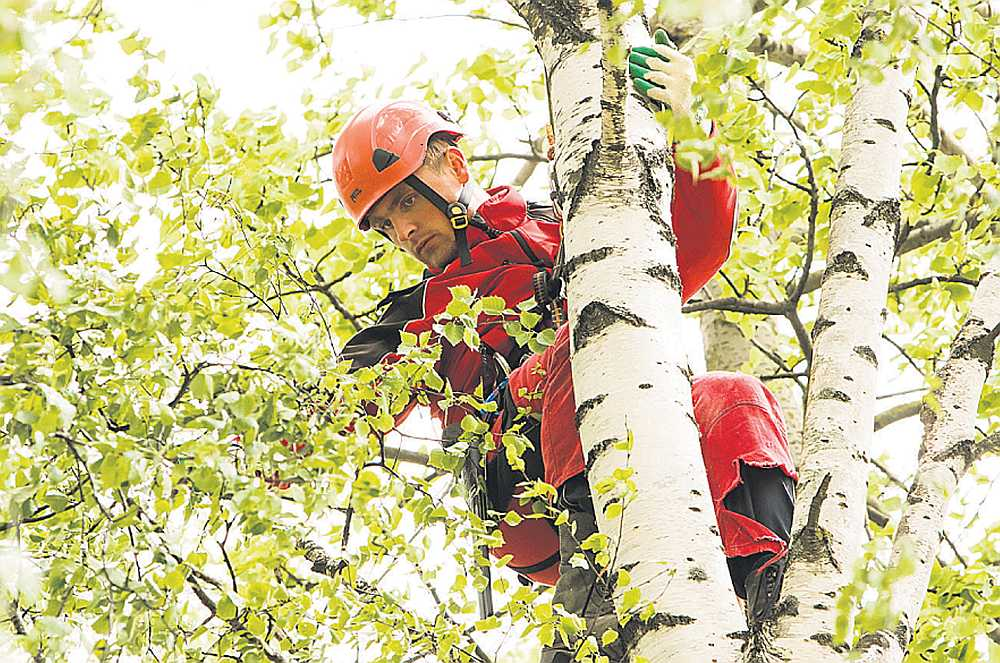 """Artis Petenko par arboristu kļuvis, mācoties """"Jauniešu garantijas"""" īstenotā programmā. Tagad puisis kopj kokus, strādādams uzņēmumā """"AnvijaPro""""."""