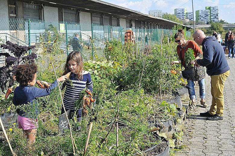 Lilles bijušās vilciena stacijas teritorija atvēlēta pilsētas dārzkopībai, kurā rosīties var ikviens iedzīvotājs.