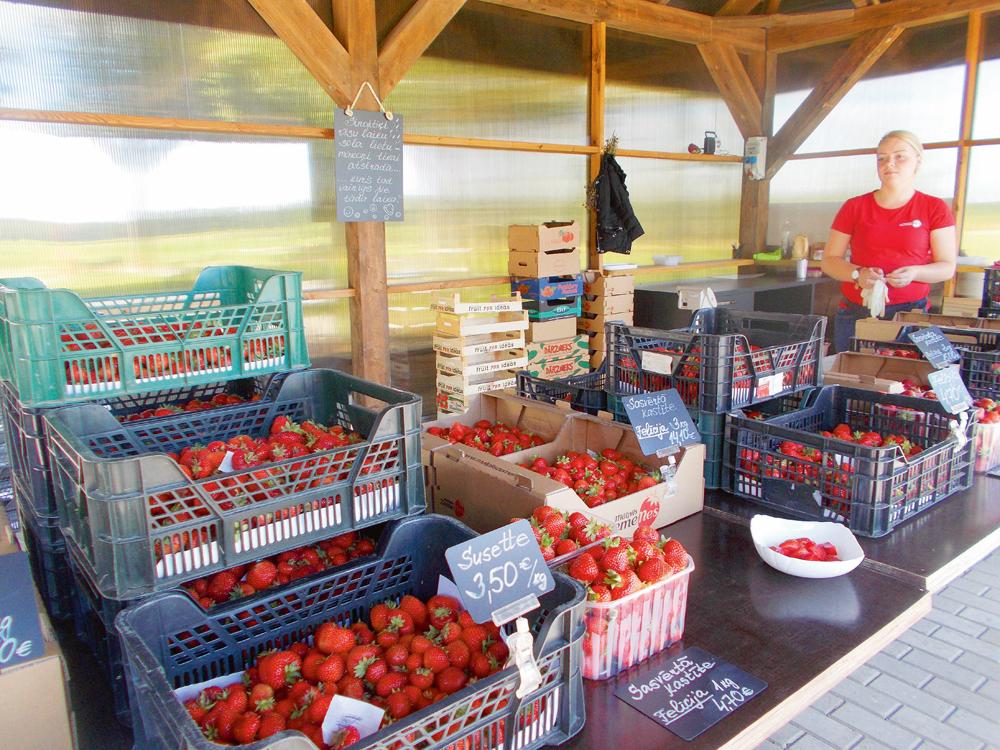 Saimniecības kioskā zemenes tirgo pa šķirnēm