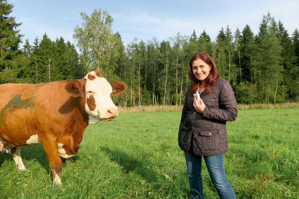 Airi Kulveitai gaļas liellopi ir gan hobijs, gan bizness.
