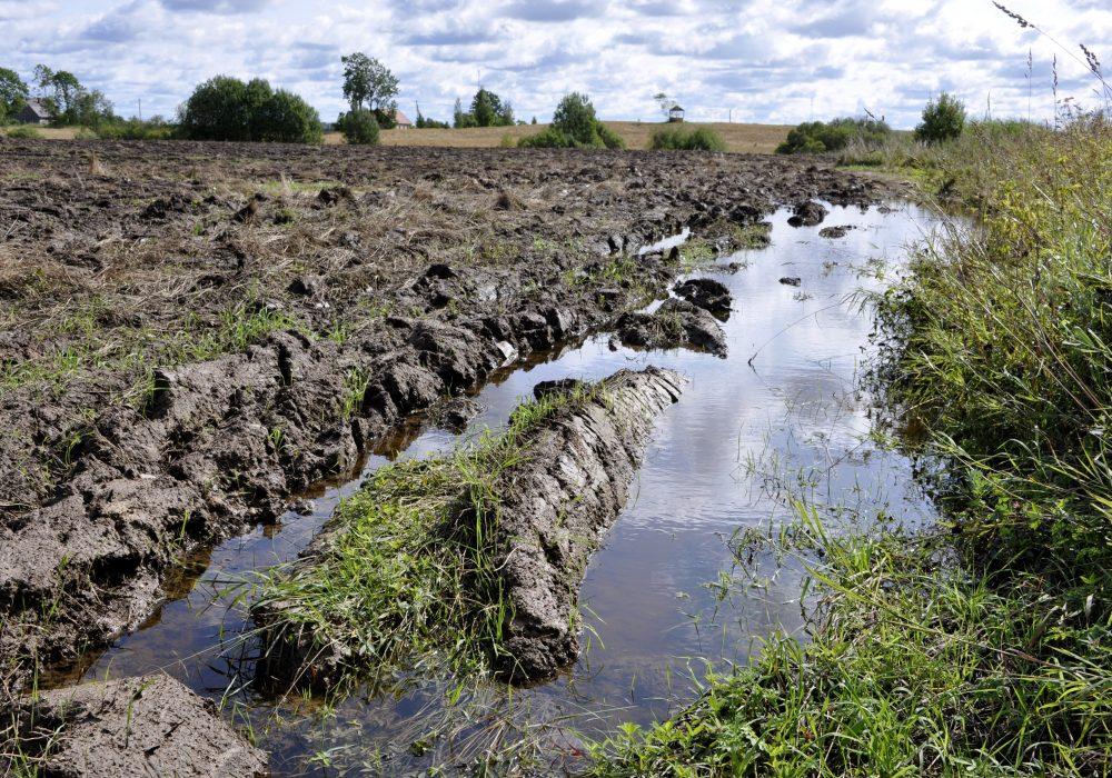 Plūdu skarts lauks Ciblas novadā
