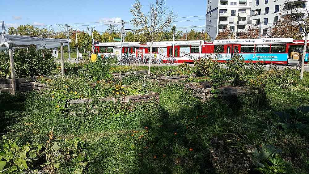 """Augstās dārzeņu dobes tramvaja galapunktā to freiburgiešu """"autostāvvietās"""", kuri atteikušies no auto."""