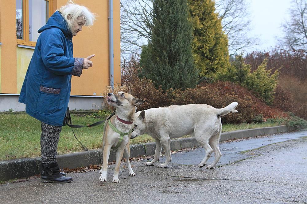 Pensionāre Inga poš pastaigai savus mīluļus – Džīnu un Batleru.