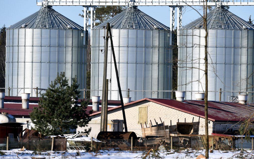 """Viena no SIA """"Ancers' cūku fermām Salaspils novadā."""