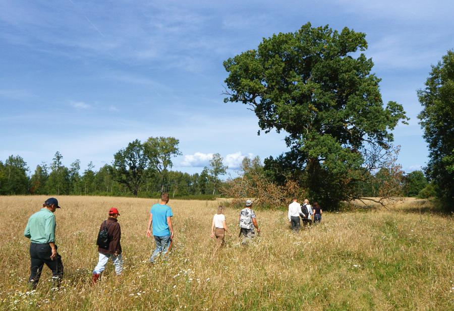 Dižkoku atbrīvotāji dodas uz Parnieku dižozolu ( resnums 6,45 m)Zanes Jančevskas vadībā 2016. gada vasarā.