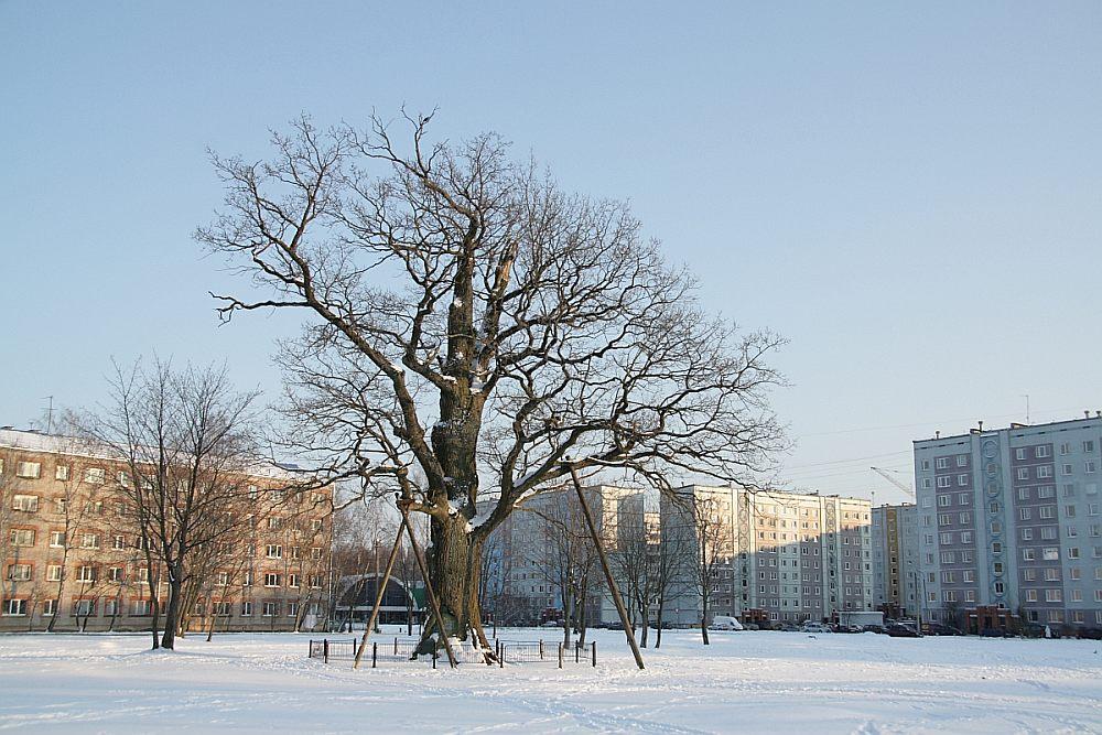 Dižkoka galvenais kritērijs ir tā izmērs un vecums. Taču ne vienmēr koka nozīmību var izteikt ar šiem diviem parametriem – arī tievāki koki, kas rada ainavisku vērtību, būtu jāaizsargā.