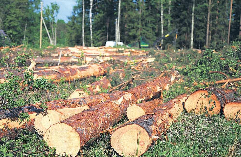 Kur un ko cirst, vairs nenosaka mežsaimnieki, bet mežrūpnieki. Tas novedis pie tā, ka mūsu meži tiek tik intensīvi cirsti kā nekad.