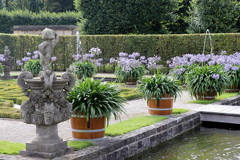 Ritms. Podi ar ziedošajiem agapantiem veido skaistu ritmu, kas atsvaidzina labi kopto dzīvžogu un no bukšiem perfekti veidotos ornamentus dārza centrā.