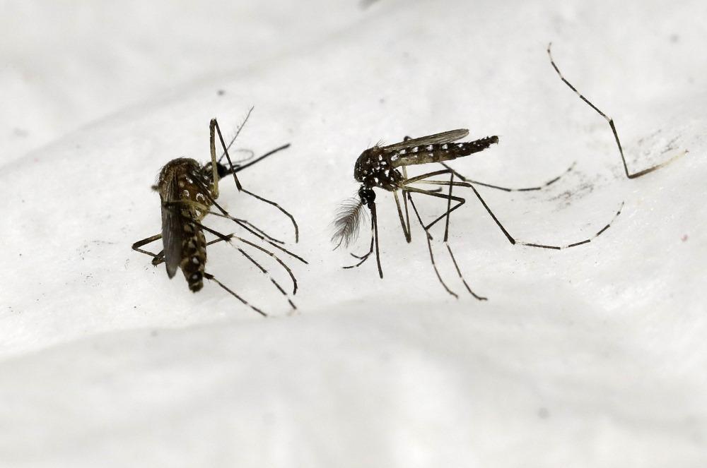 Malārijas ierosinātājus pārnēsā vairākas malārijodu sugas.