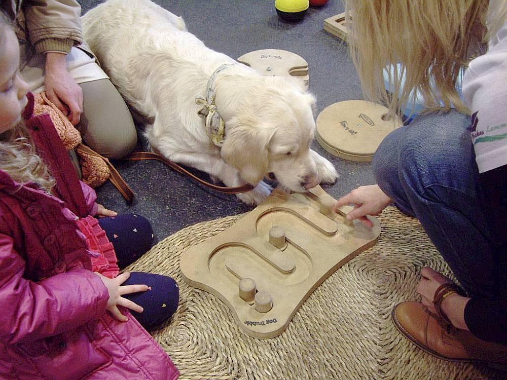 Izstādē bija apskatāms plašs spēļu klāsts, suņiem bija iespēja izmēģināt vairākas spēles.