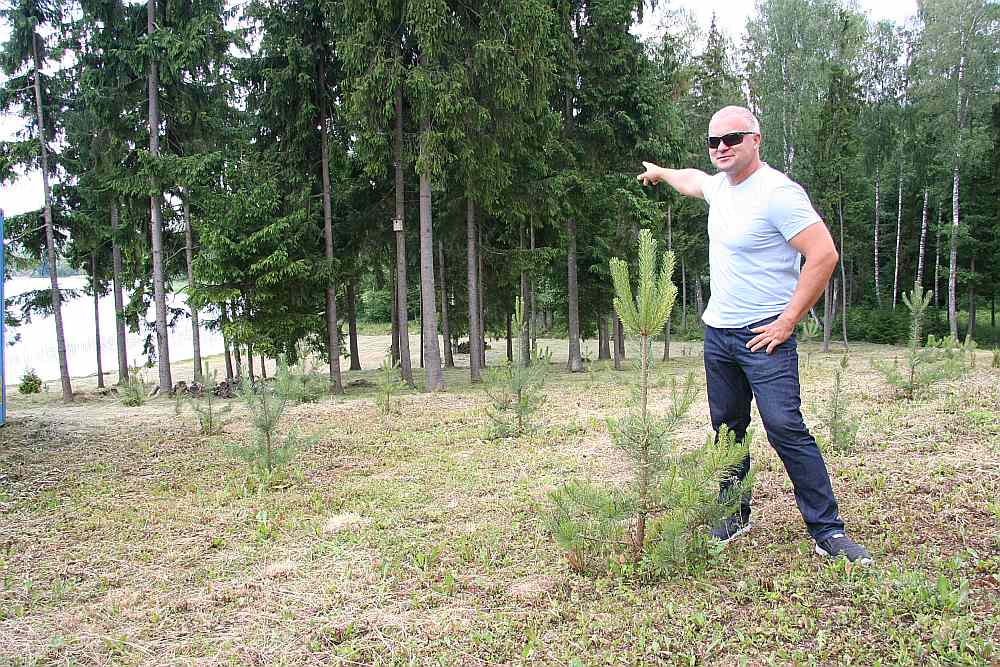 """Boriss Veļičko pie paša stādītajām priedītēm, kas aug nopirktās kailcirtes vietā. Fonā """"iekārtotā pludmale"""", kas tik bargi izskanēja tiesas zālē no prokurores teiktā."""
