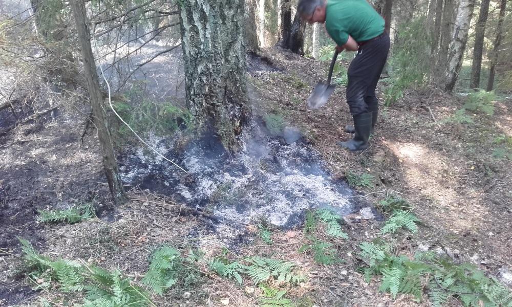 Lieli postījumi dabai Ķemeru Nacionālajā parkā ugunsgrēka laikā nav nodarīti.