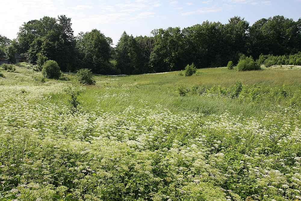 Latvijā joprojām ir daudz platību ziņā nelielu, daļēji aizaugušu zemes gabalu.