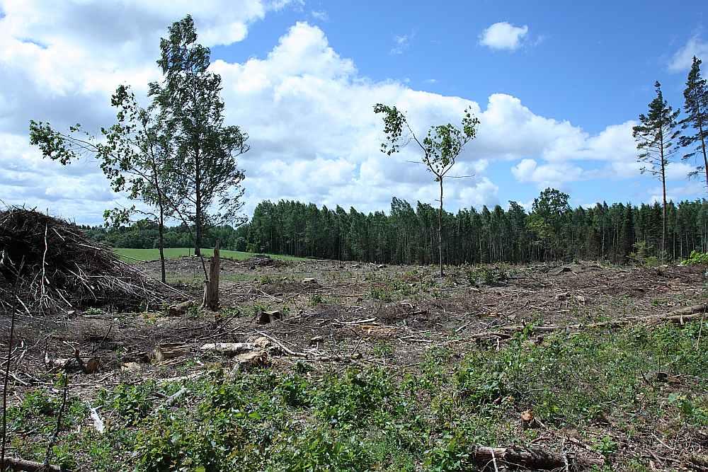 Veicot kailcirti, dabas daudzveidībai tiek saglabātas ekoloģiskās vērtības: sēklas un ekoloģiskie koki, mirušie koki un kritalas, ciršanas atliekas.