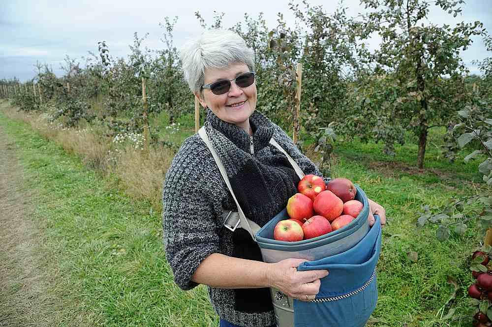 """""""Raža nav pārbagāta, bet kopumā vērtējama kā laba. Tāpat kā pērn, arī šogad ābolus realizēsim dažādos veidos. Daļu liksim noliktavā un tirgosim vēlāk, daļu pārdosim pa taisno no lauka pārstrādātājiem, kas spiež sulu un taisa vīnu,"""" stāsta zemnieku saimniecības """"Mucenieki"""" īpašniece Ligita Rezgale."""