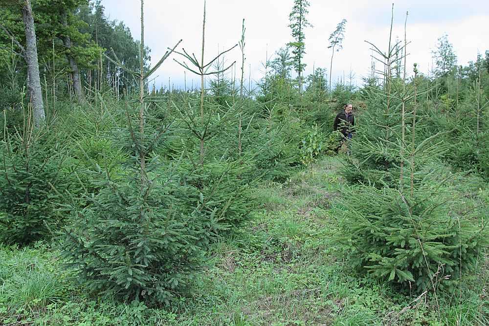 LVM tiek domāts arī par to, kādus darbus mehanizēt. Tā varētu būt meža stādīšana. Ne ļoti plaši, bet Skandināvijā to jau izmantojot.