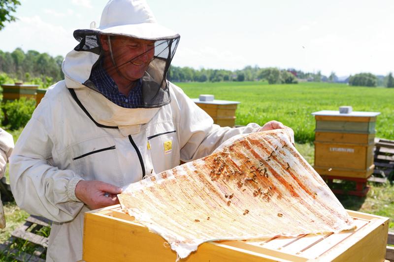 Ēberliņu dravā mīt galvenokārt Itālijas bites. To medus un raksturs Ēberliņiem ir vistīkamākais.