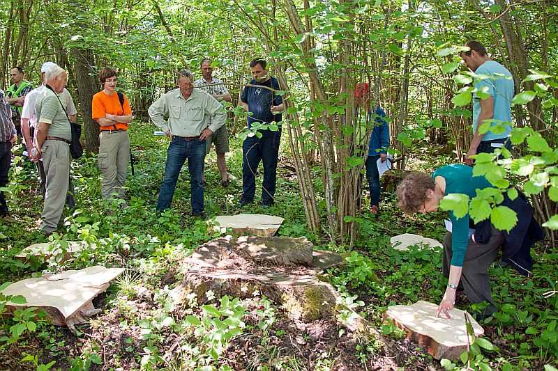Meža īpašnieki ir vienisprātis – lai saimniekotu ar izlases cirtēm, zināšanām par mežu jābūt ļoti labām.
