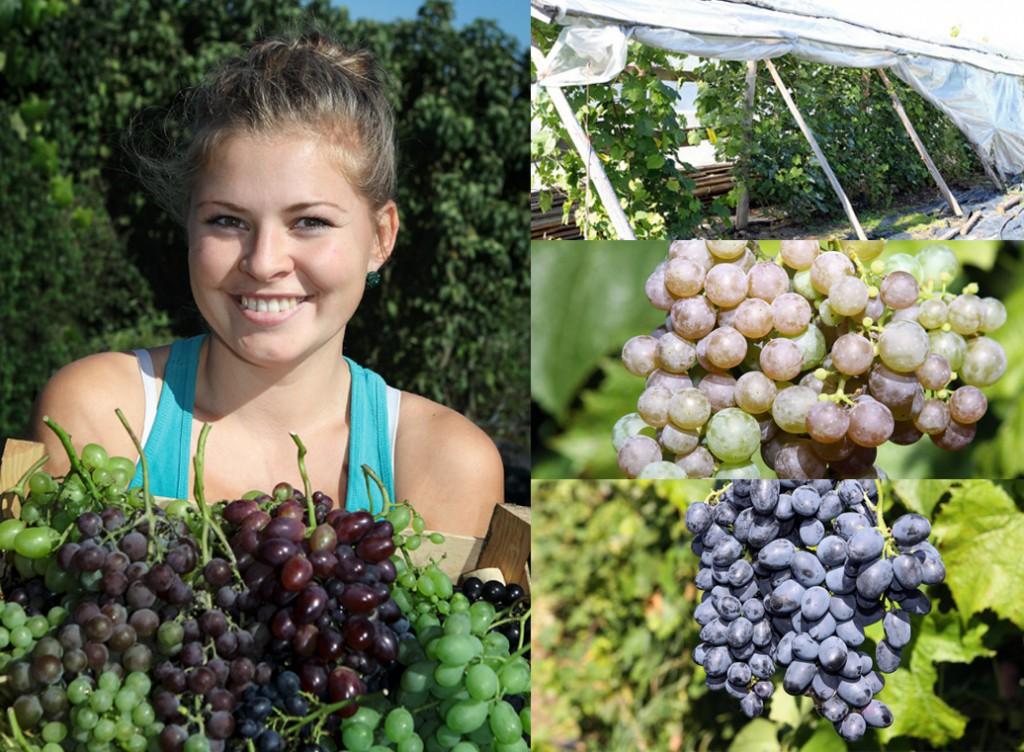 """Laila Siliņa, jaunā saimniece. Vīnogu audzētāji. Z/s """"Gulbīši"""", Kalsnavas pagasts, Madonas novads, mājas  """"Gulbīši"""".   05/09/2014 foto: Valdis Semjonovs/Praktiskais Latvietis"""