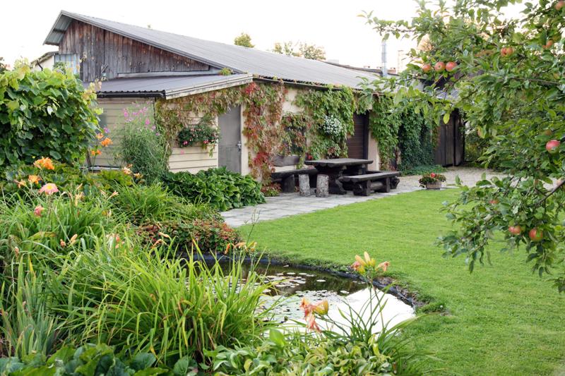 Dārza dīķītis izklāts ar plēvi. Ūdens tuvuma iespaidu paspilgtina dienziežu lapu puduri krastmalā.