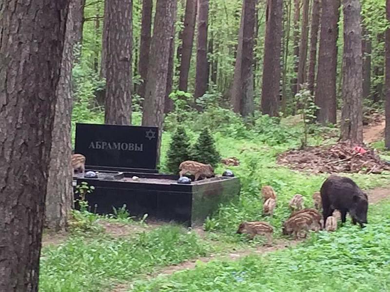 Mežacūkas Šmerļa kapos.