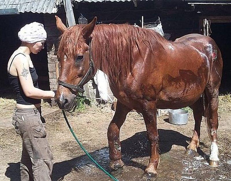 """Ķēves Mairas glābšana pavērsusies pret pašām glābējām – PVD lūgs Valsts policiju rosināt krimināllietu pret dzīvnieku aizsardzības biedrību """"Ķepu ķepā"""" par cietsirdīgu izturēšanos pret dzīvnieku. Attēlā: viena no glābējām Gundega Bidere kopā ar Mairu."""