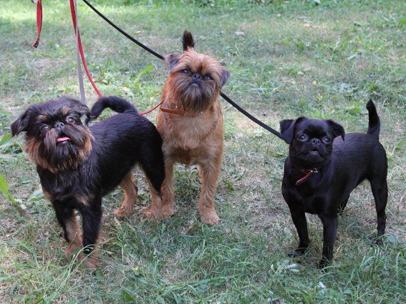 Tikai daži no Ruvinsku ģimenes jautrās suņu saimes.