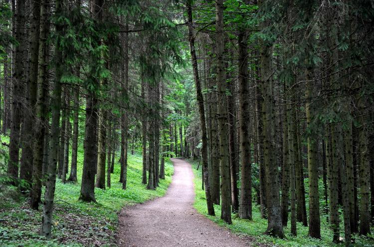 Ceļš mežā.