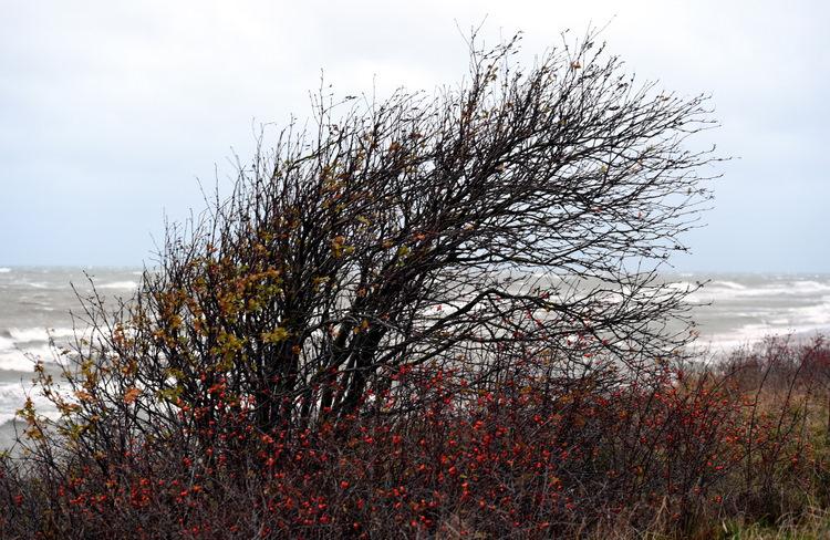 Spēcīgas vēja brāzmas Kurzemes piekrastē.
