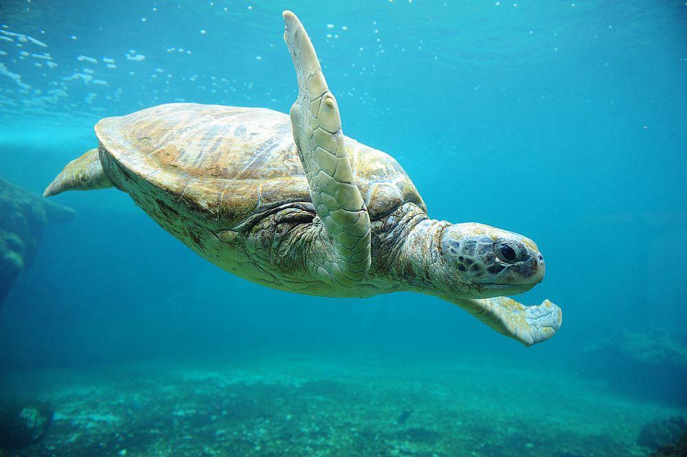 Foto - Fotolia Observatoire des tortues marines de Kélonia