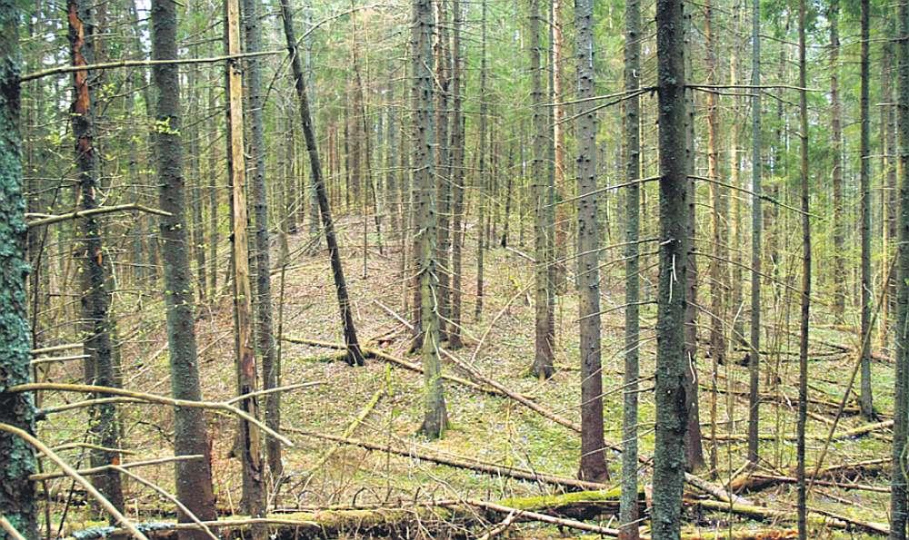 Jaunatklātais Dagdas novada Andrupenes pagasta Beitānu pilskalns no ļaužu acīm slēpies dziļi egļu mežā.