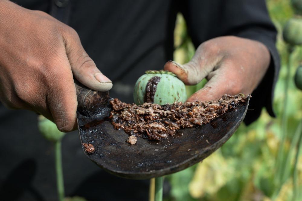 Ilustratīvs foto. Opijs no magonēm Afganistānā.