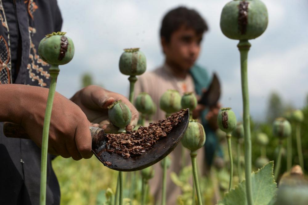 Opija magoņu lauks Afganistānā, 2018.