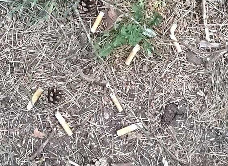 """""""Latvijas Avīzes"""" lasītājs pamanījis bīstamu skatu kāpu mežā Jūrmalā."""