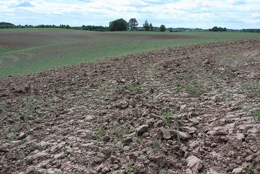 Standarta polisē sējumu apdrošināšana zemniekam izmaksā vidēji 10–40 eiro par vienu hektāru, bet, riska faktoros iekļaujot sausumu, tā var maksāt vēl dārgāk.