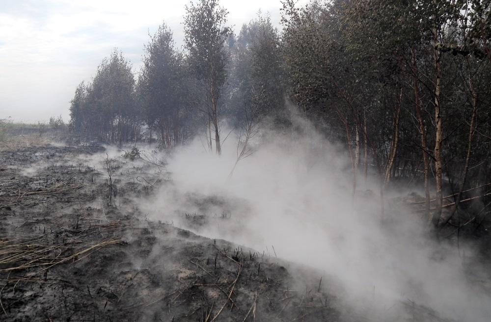 Jau trešo dienu turpina dzēst plašo kūdras un meža ugunsgrēku Kurzemē – Talsu novadā, 20.07.2018.