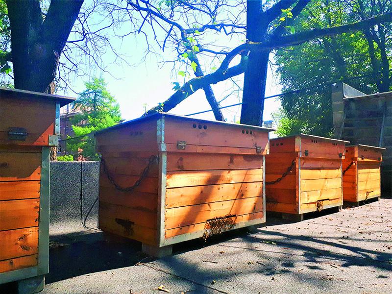 Uz viesnīcas Janne uzbūvēta speciāla platforma bišu stropiem.