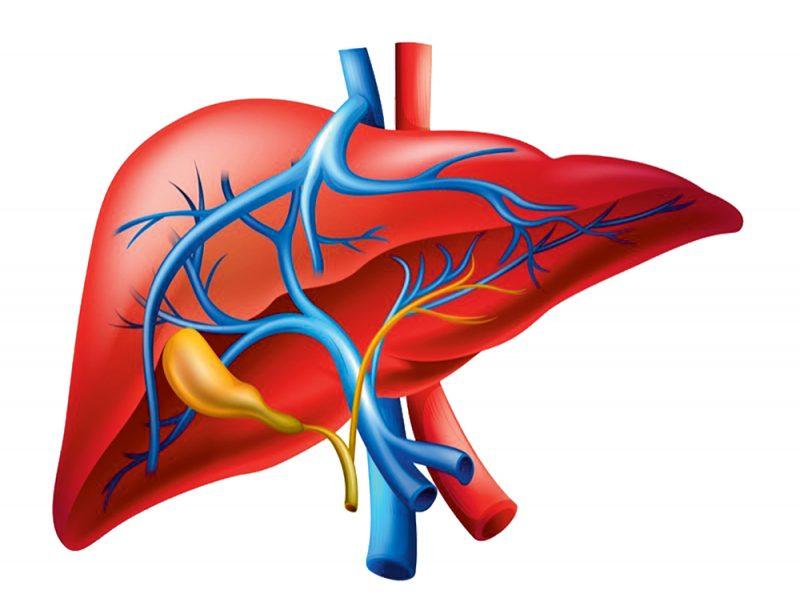 Slimība, kas progresē lēnām un nemanāmi – taukainā hepatoze jeb aknu aptaukošanās